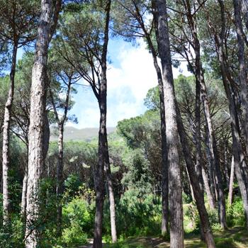 https://www.marinadilaccoameno.com/uploads/vigna-articolo-square.jpg
